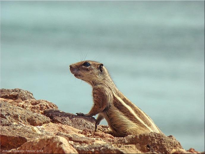pensionati a Fuerteventura